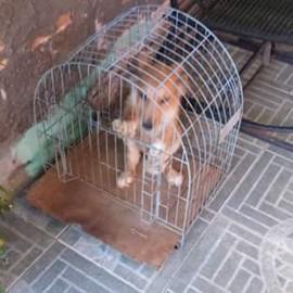 cachorro_gaiola
