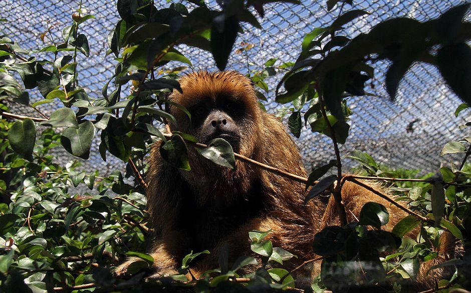 58 macacos foram encontrados mortos em janeiro na capital baiana