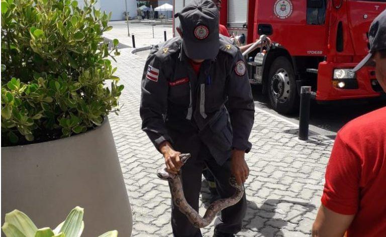 Cobra da espécie Jiboia é encontrada no shopping em Camaçari