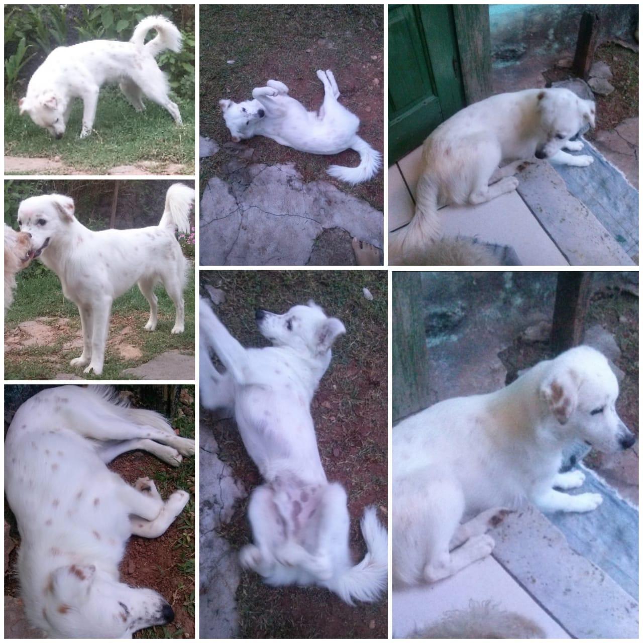 Camaçari: idosa procura por cachorro de estimação que sumiu na Gleba E