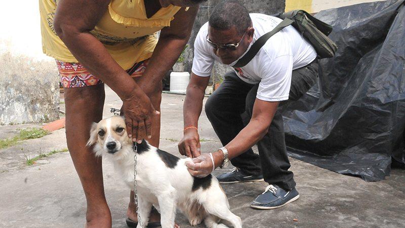 Vacinação antirrábica animal é suspensa por falta de reabastecimento em Camaçari