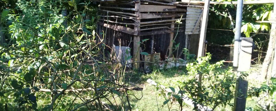 Grupo é resgatado de trabalho análogo à escravidão no interior do estado