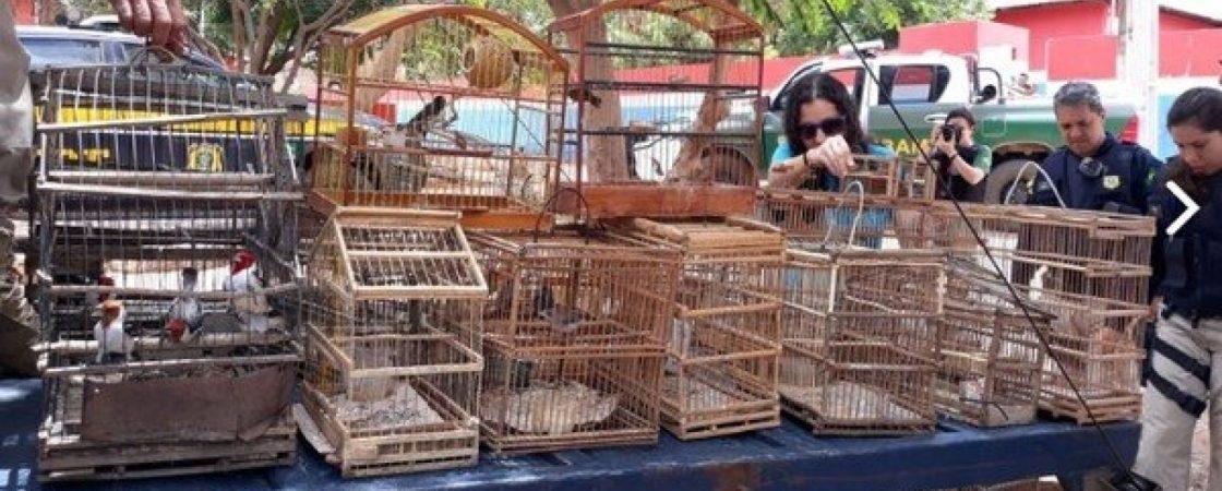 Mais de 200 animais silvestres são resgatados durante operação da MP-BA
