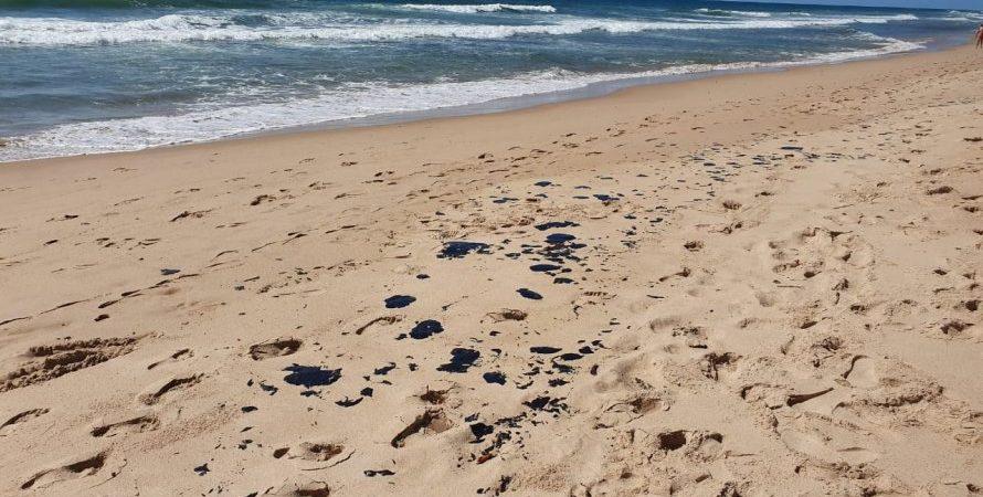 Manchas de óleo: UFBA registra aumento na mortalidade de corais em Camaçari e Mata de São João