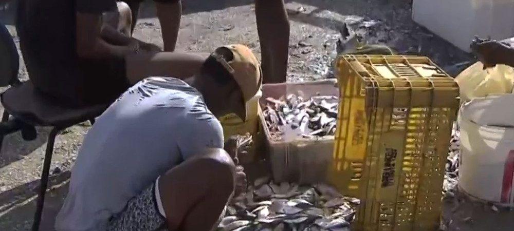Salvador: pescadores seguem relatando queda na venda de pescados após óleo no litoral baiano