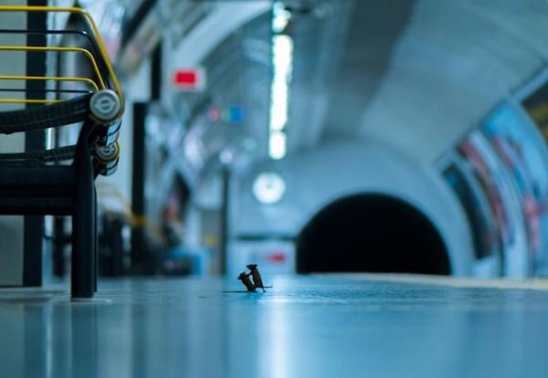Imagem de camundongos brigando ganha prêmio de fotografia