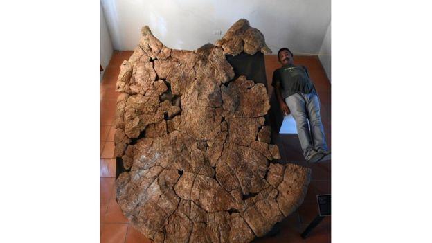 Fóssil revela tartaruga pré-histórica do tamanho de um carro